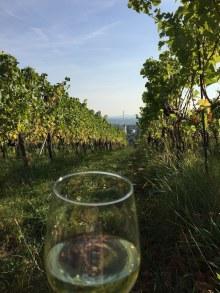 Wiener Weißwein in den Weinbergen genießen